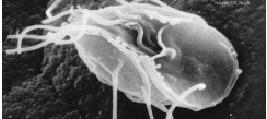 virusul papilomavirus uman la bărbați viermi în tratamente pentru adulți