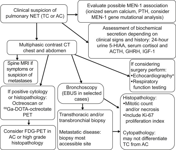neuroendocrine cancer in lung giardia gatos diaree
