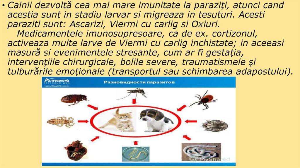 tipuri de paraziti externi virus hpv latenza