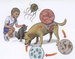 Paraziti la copiii mici
